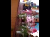 мис осень виход алисы - Аня федорець, и кота базилива - Наташи Ващенко